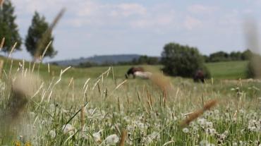 agriculture_animals_blurred_background_countryside_dandelions_daylight_farm_farmland-1541811